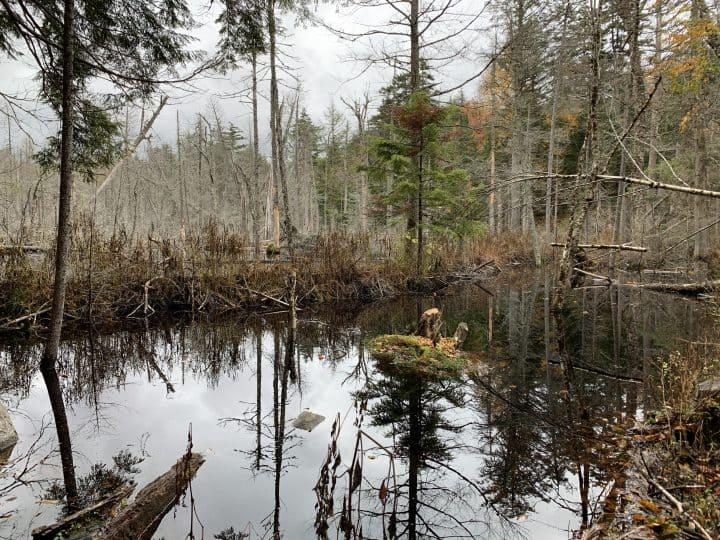 Beaver dam in Lake Placid