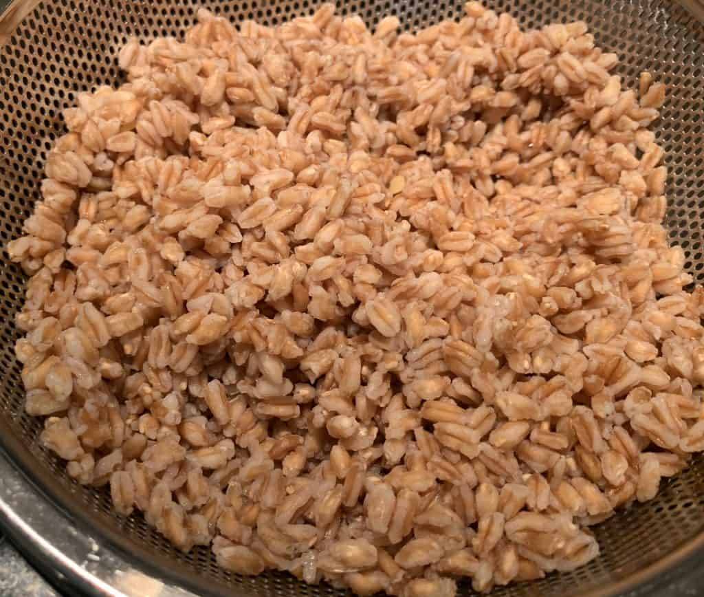Cooked Farro in strainer
